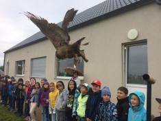 Dravci a sovy ve škole (23. 5.)